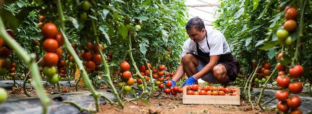 """Reconversion: les """"espaces-tests"""" agricoles à la recherche de candidats"""